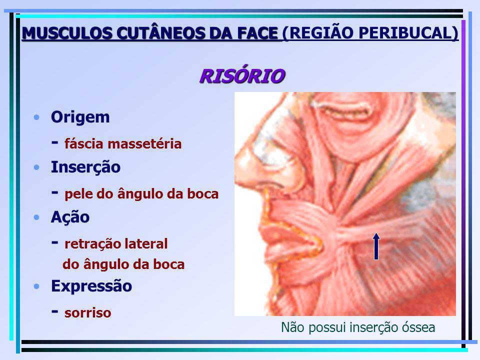 MUSCULOS CUTÂNEOS DA FACE (REGIÃO PERIBUCAL) RISÓRIO
