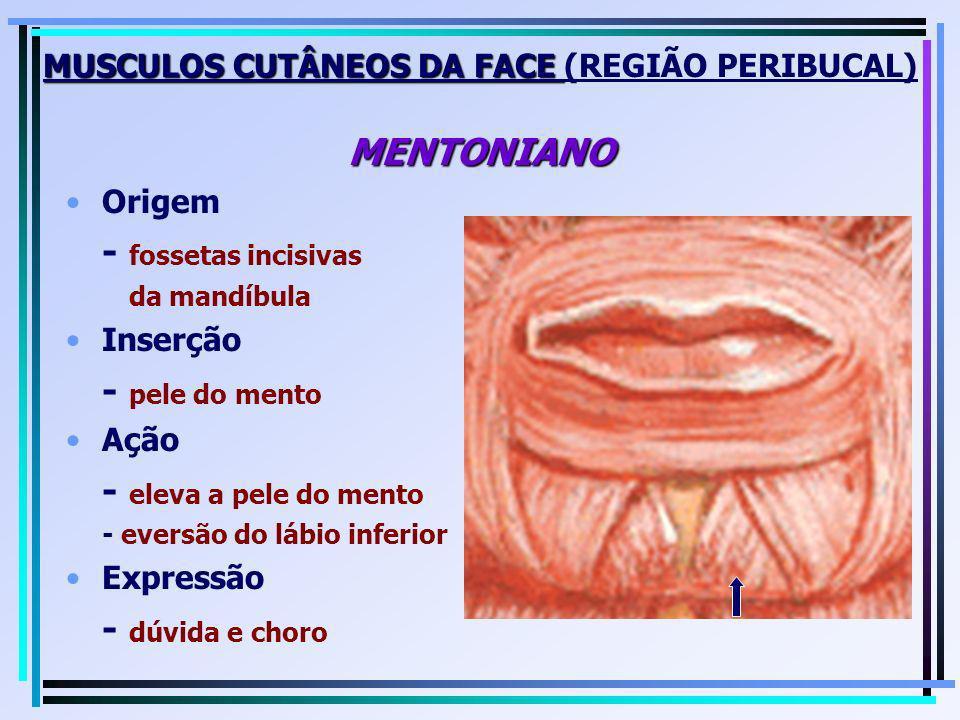 MUSCULOS CUTÂNEOS DA FACE (REGIÃO PERIBUCAL) MENTONIANO