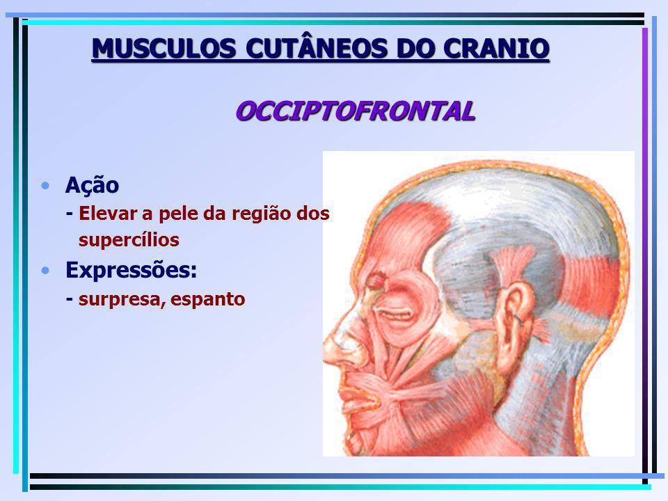 MUSCULOS CUTÂNEOS DO CRANIO OCCIPTOFRONTAL