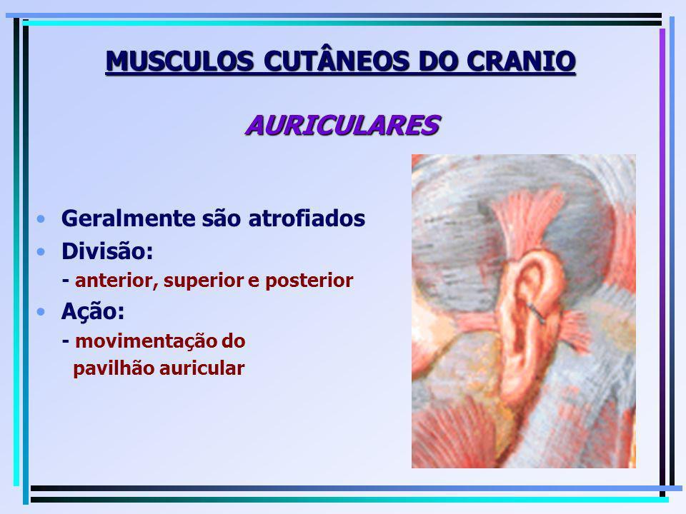 MUSCULOS CUTÂNEOS DO CRANIO