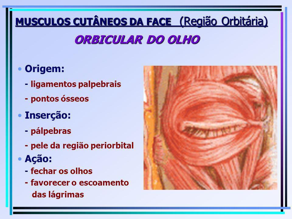 MUSCULOS CUTÂNEOS DA FACE (Região Orbitária) ORBICULAR DO OLHO
