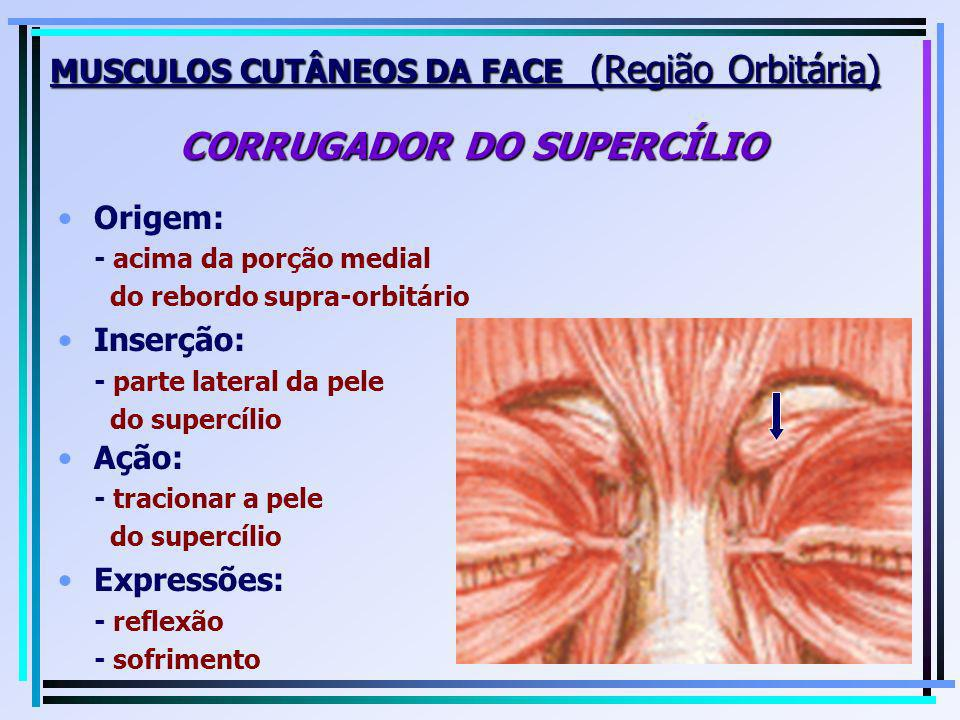 MUSCULOS CUTÂNEOS DA FACE (Região Orbitária) CORRUGADOR DO SUPERCÍLIO