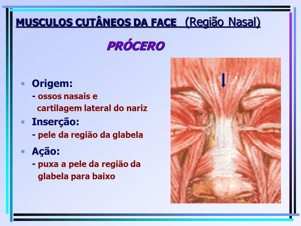 MUSCULOS CUTÂNEOS DA FACE (Região Nasal) PRÓCERO