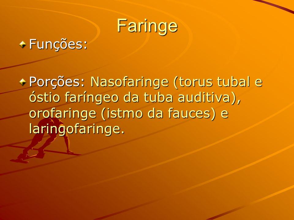 Faringe Funções: Porções: Nasofaringe (torus tubal e óstio faríngeo da tuba auditiva), orofaringe (istmo da fauces) e laringofaringe.