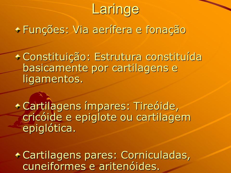 Laringe Funções: Via aerífera e fonação