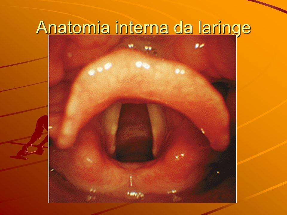 Anatomia interna da laringe