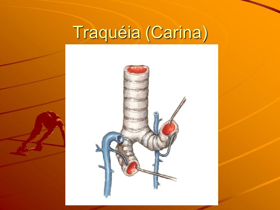 Traquéia (Carina)