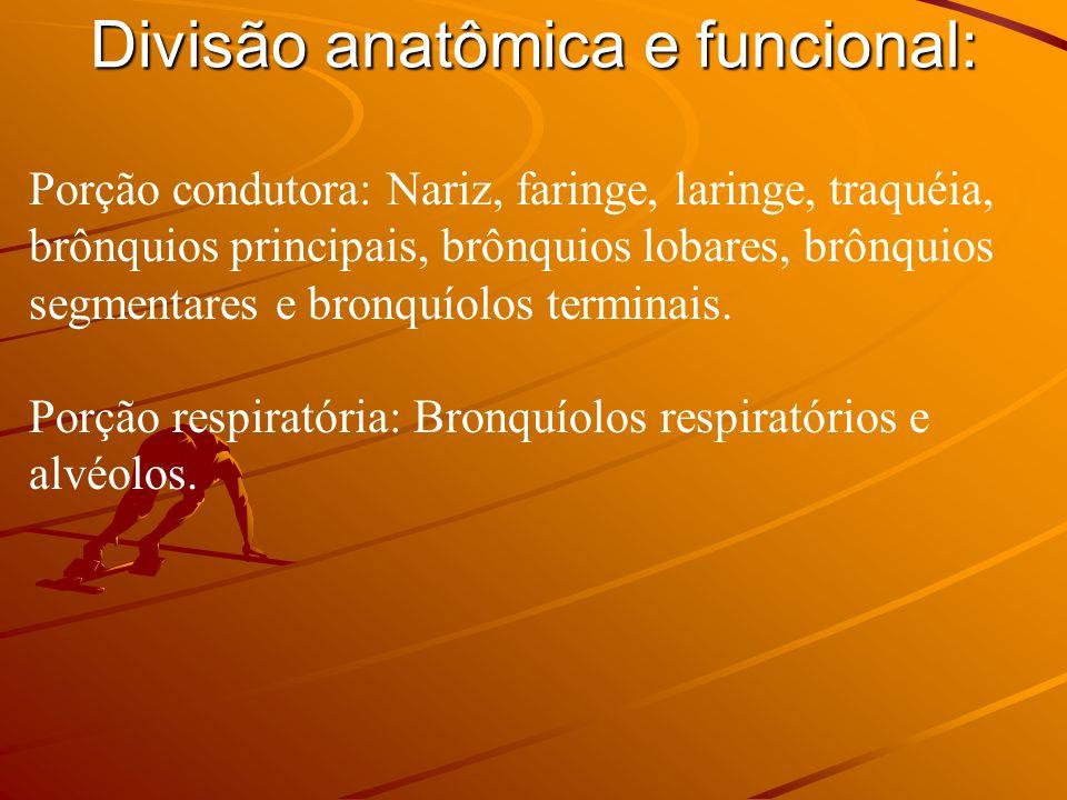 Divisão anatômica e funcional: