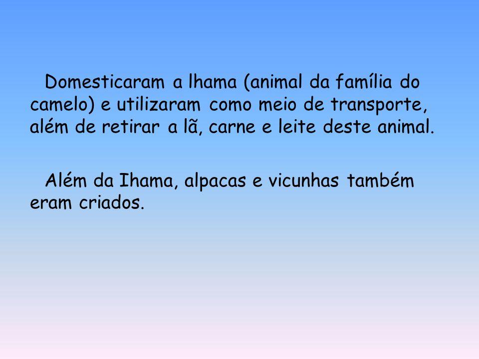 Domesticaram a lhama (animal da família do camelo) e utilizaram como meio de transporte, além de retirar a lã, carne e leite deste animal.