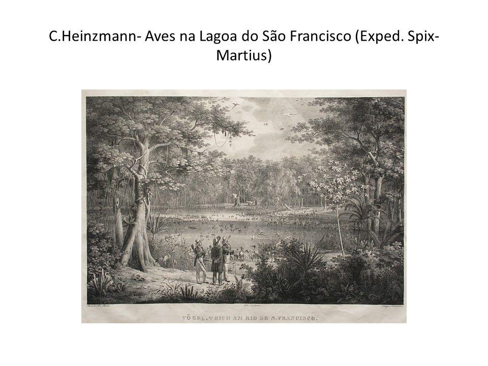 C.Heinzmann- Aves na Lagoa do São Francisco (Exped. Spix-Martius)