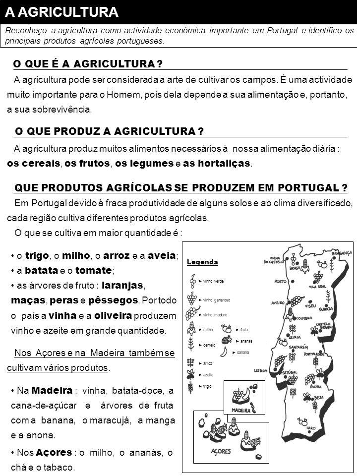 A AGRICULTURA O QUE É A AGRICULTURA O QUE PRODUZ A AGRICULTURA