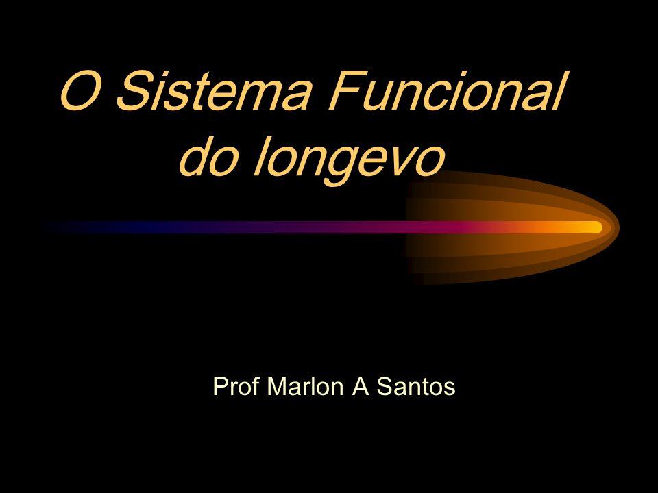 O Sistema Funcional do longevo