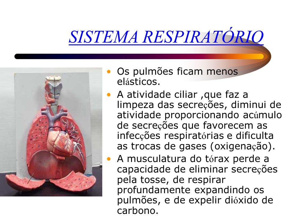 SISTEMA RESPIRATÓRIO Os pulmões ficam menos elásticos.