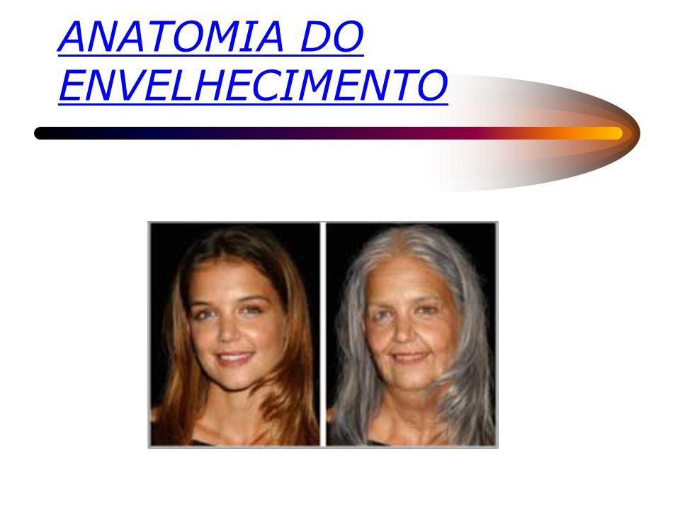 ANATOMIA DO ENVELHECIMENTO