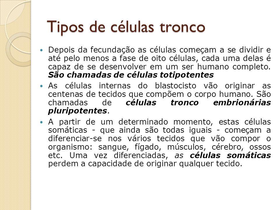 Tipos de células tronco