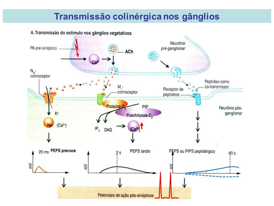 Transmissão colinérgica nos gânglios