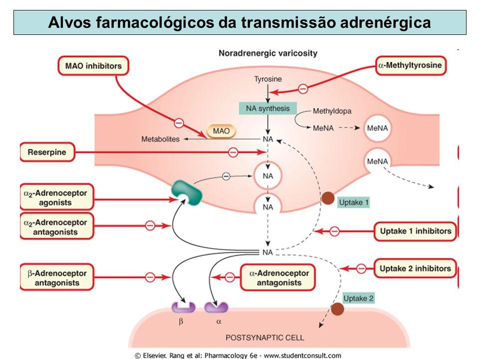 Alvos farmacológicos da transmissão adrenérgica