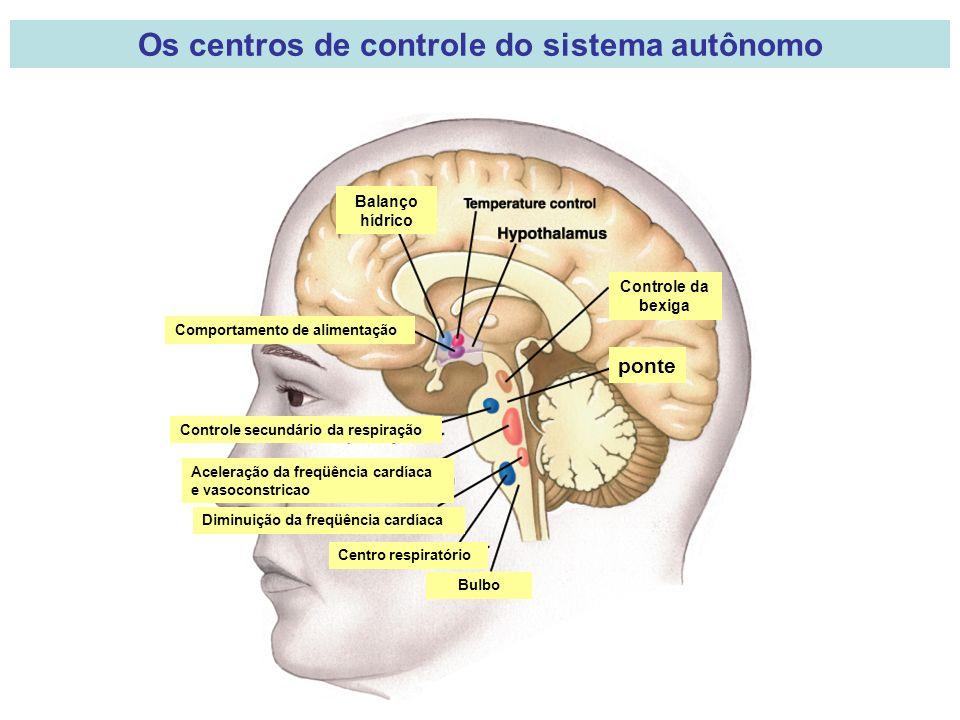 Os centros de controle do sistema autônomo