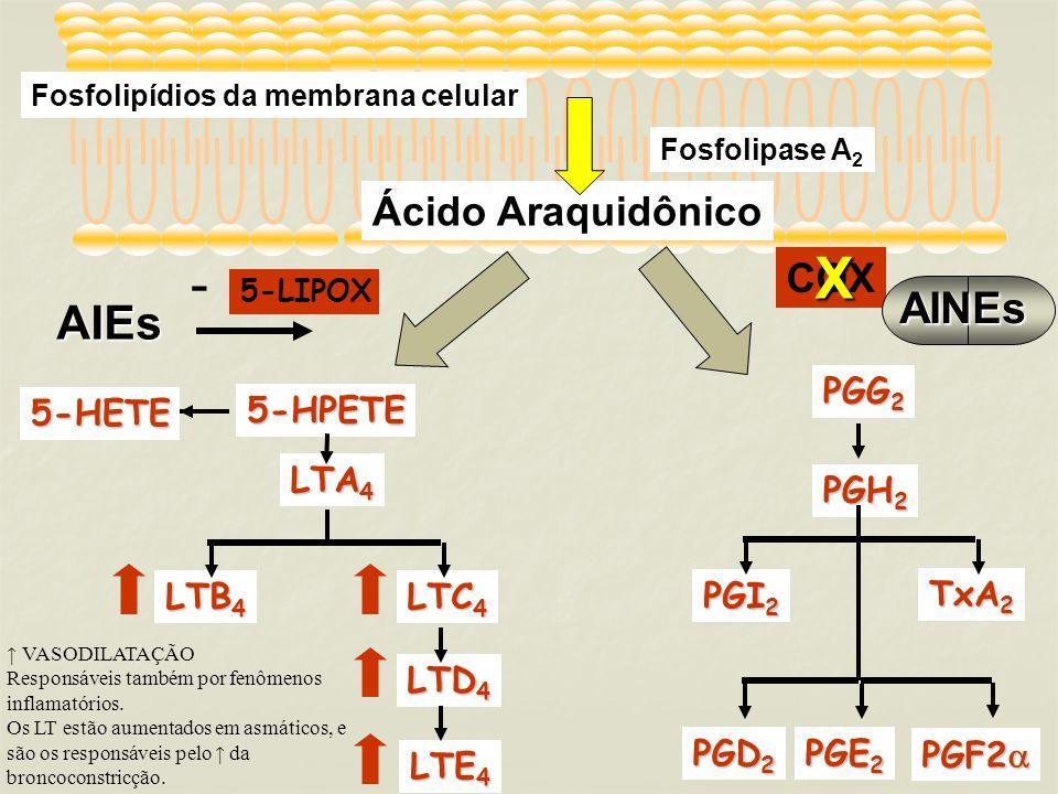 X - AIEs AINEs Ácido Araquidônico COX PGG2 5-HETE 5-HPETE LTA4 PGH2