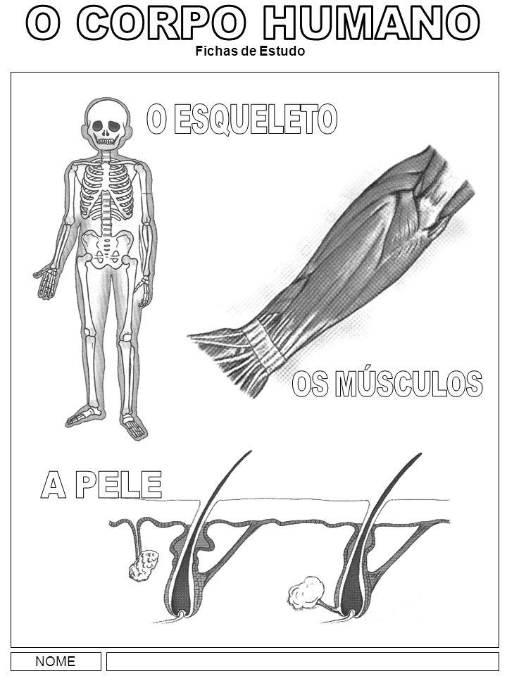 O CORPO HUMANO Fichas de Estudo O ESQUELETO OS MÚSCULOS A PELE NOME