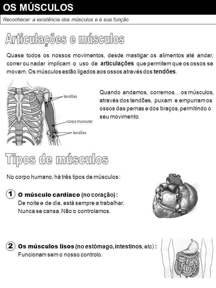 Articulações e músculos