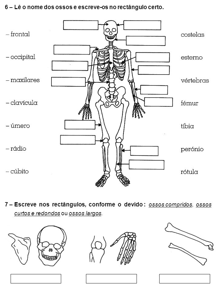 6 – Lê o nome dos ossos e escreve-os no rectângulo certo.