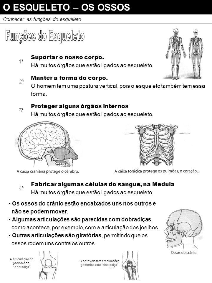 Funções do Esqueleto O ESQUELETO – OS OSSOS Suportar o nosso corpo. 1ª