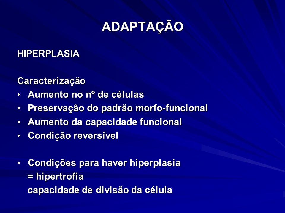ADAPTAÇÃO HIPERPLASIA Caracterização Aumento no nº de células