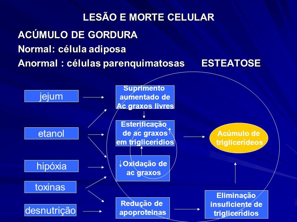 Normal: célula adiposa Anormal : células parenquimatosas ESTEATOSE