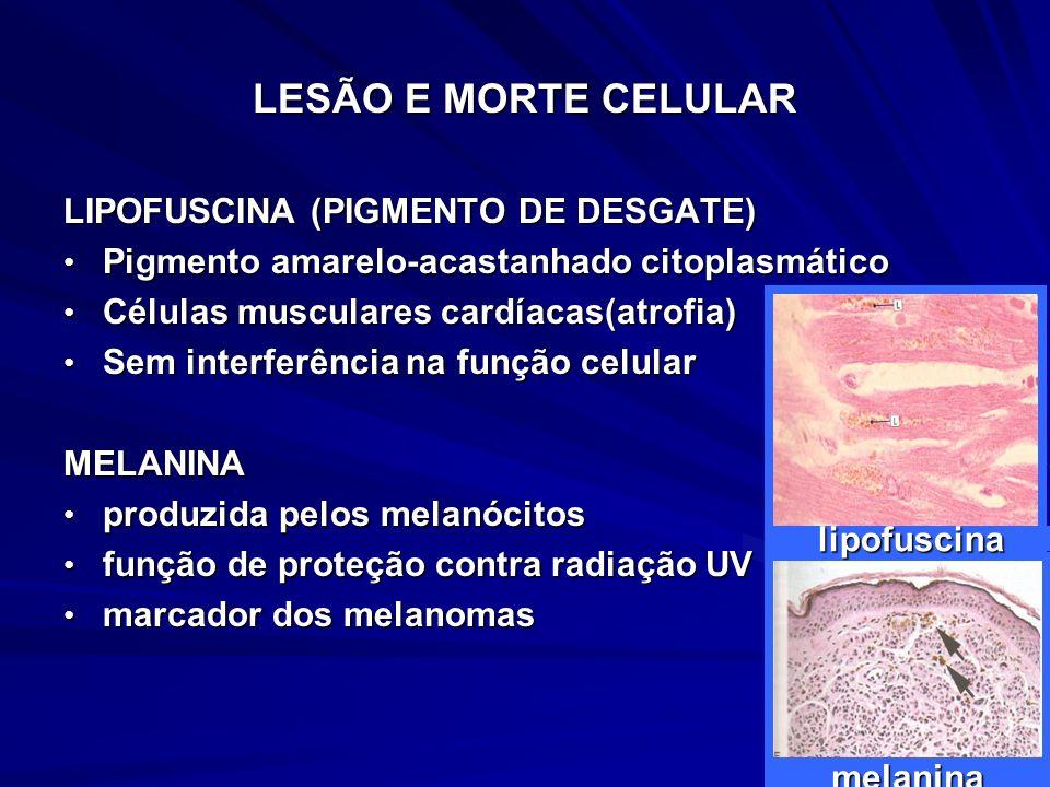 LESÃO E MORTE CELULAR LIPOFUSCINA (PIGMENTO DE DESGATE)