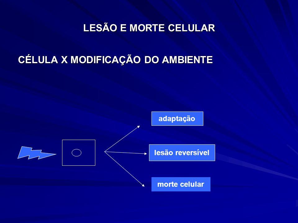 CÉLULA X MODIFICAÇÃO DO AMBIENTE
