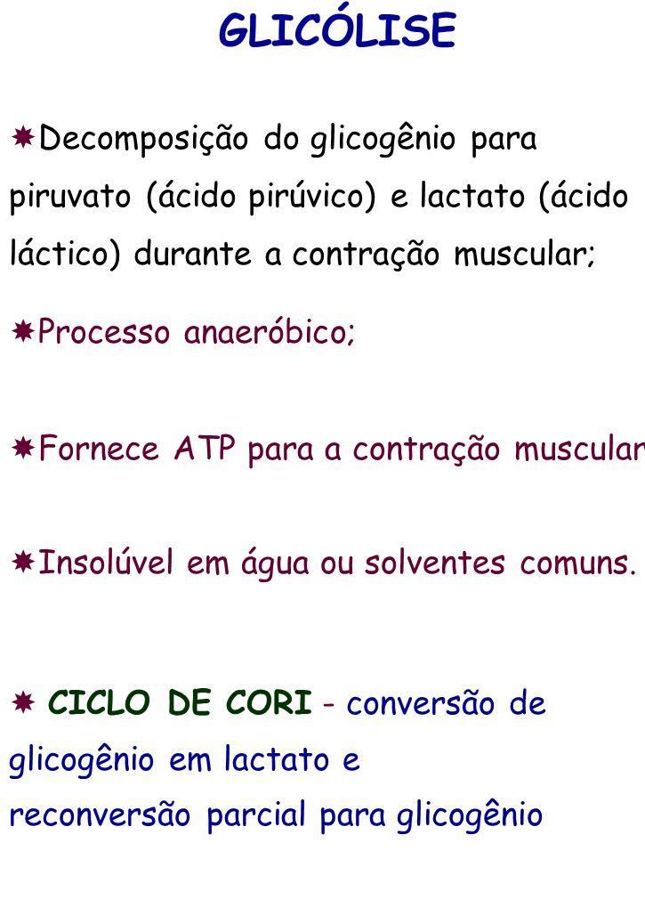 GLICÓLISE Decomposição do glicogênio para piruvato (ácido pirúvico) e lactato (ácido láctico) durante a contração muscular;