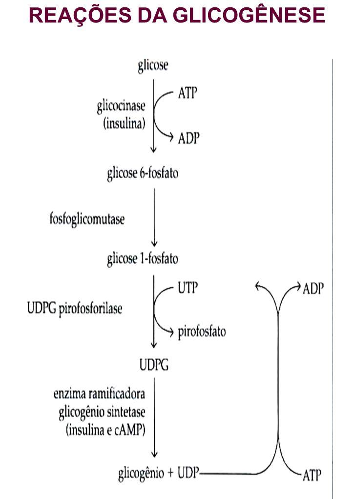 REAÇÕES DA GLICOGÊNESE