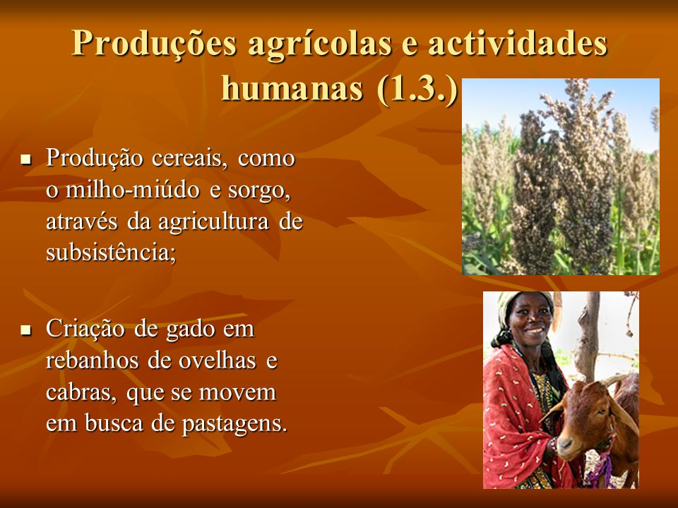 Produções agrícolas e actividades humanas (1.3.)