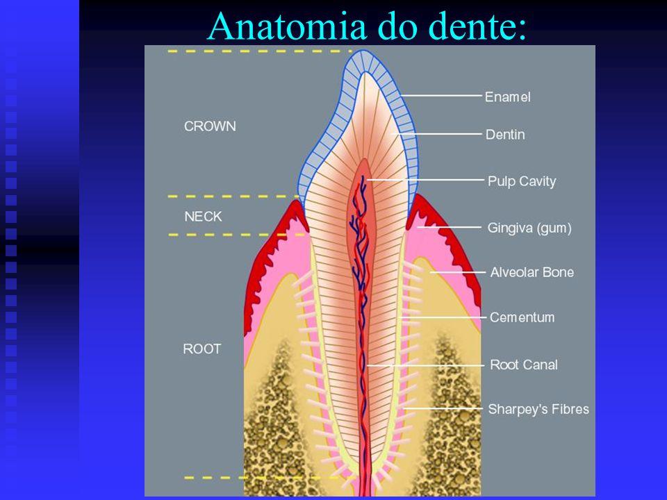 Anatomia do dente: