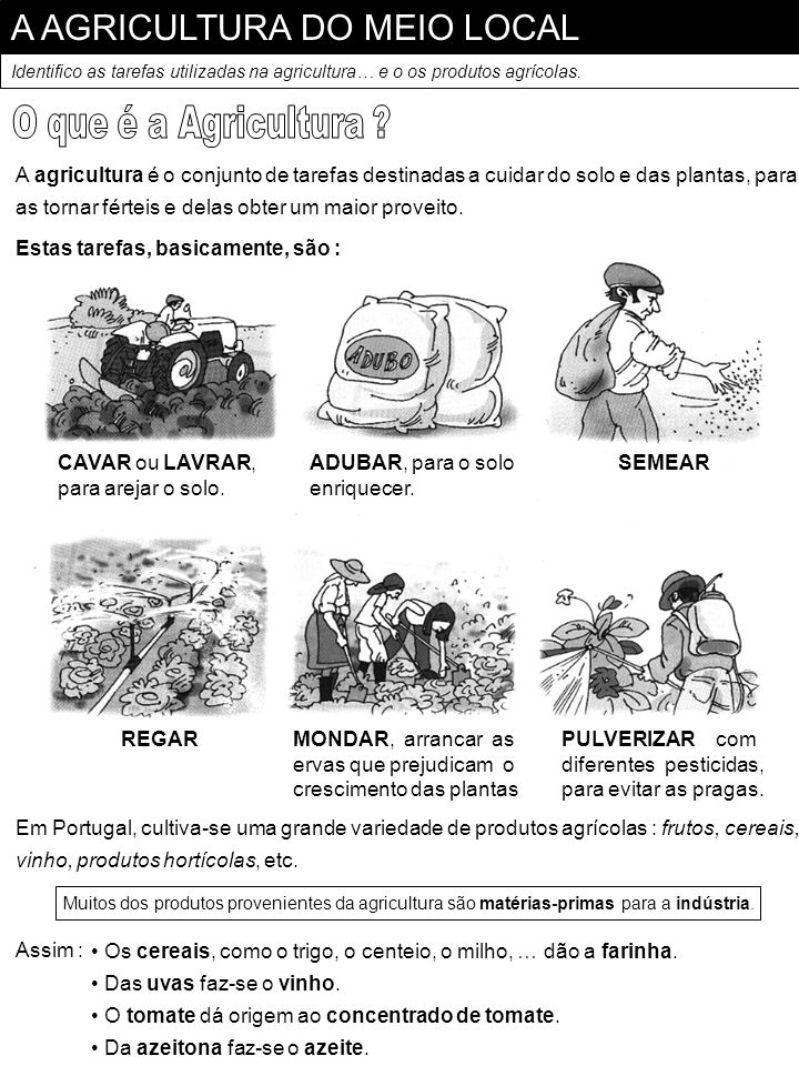 A AGRICULTURA DO MEIO LOCAL