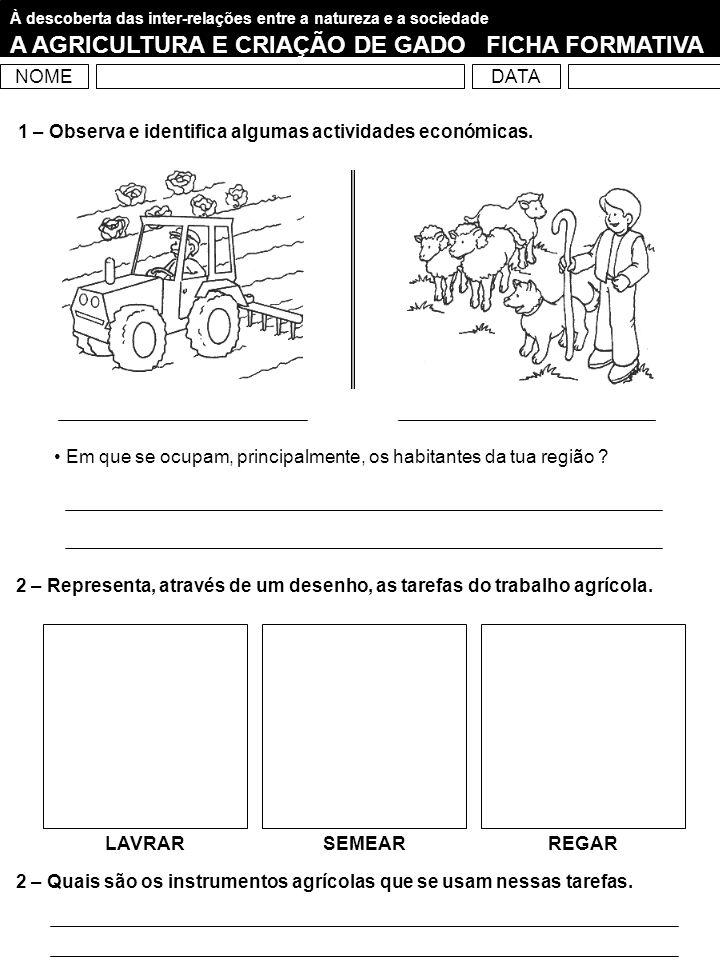 A AGRICULTURA E CRIAÇÃO DE GADO FICHA FORMATIVA