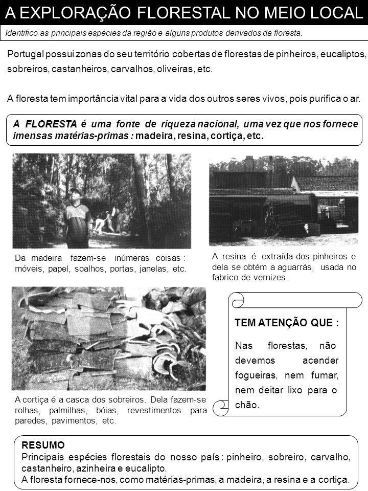 A EXPLORAÇÃO FLORESTAL NO MEIO LOCAL