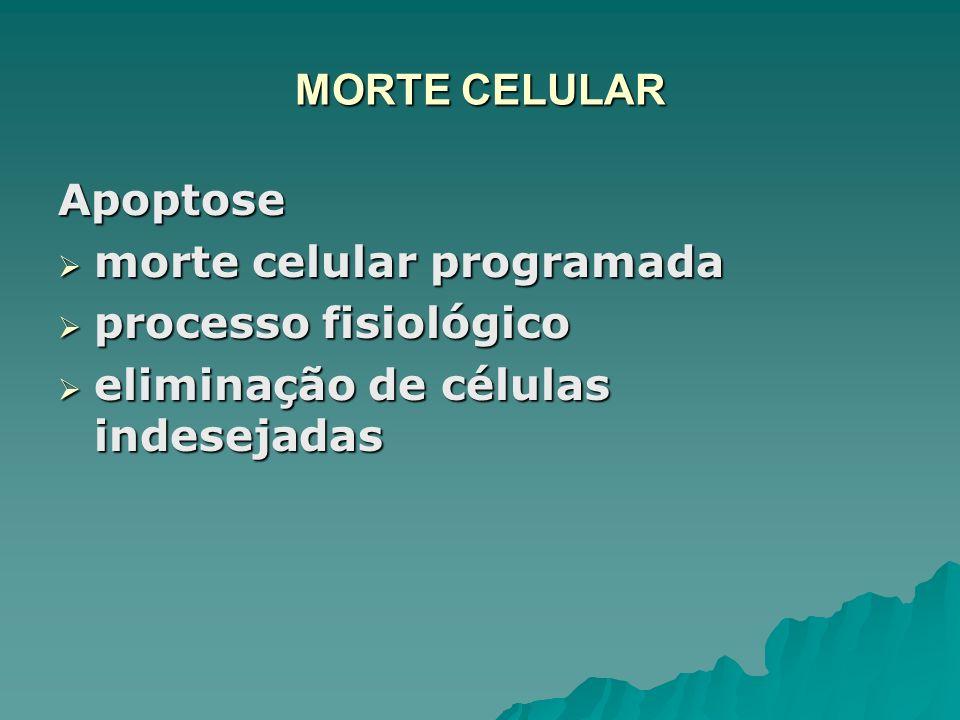 MORTE CELULAR Apoptose. morte celular programada.