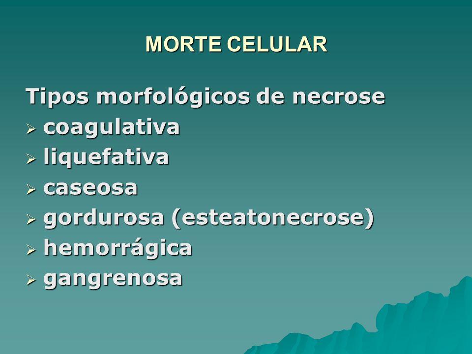 MORTE CELULAR Tipos morfológicos de necrose. coagulativa. liquefativa. caseosa. gordurosa (esteatonecrose)