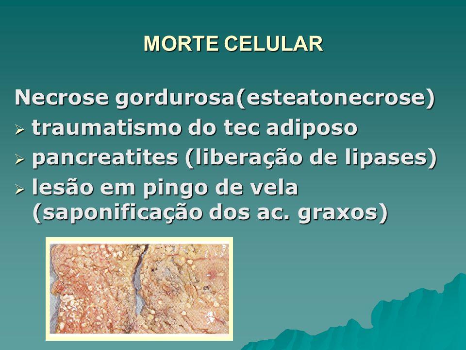 MORTE CELULAR Necrose gordurosa(esteatonecrose) traumatismo do tec adiposo. pancreatites (liberação de lipases)