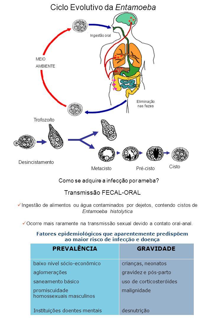 Ciclo Evolutivo da Entamoeba