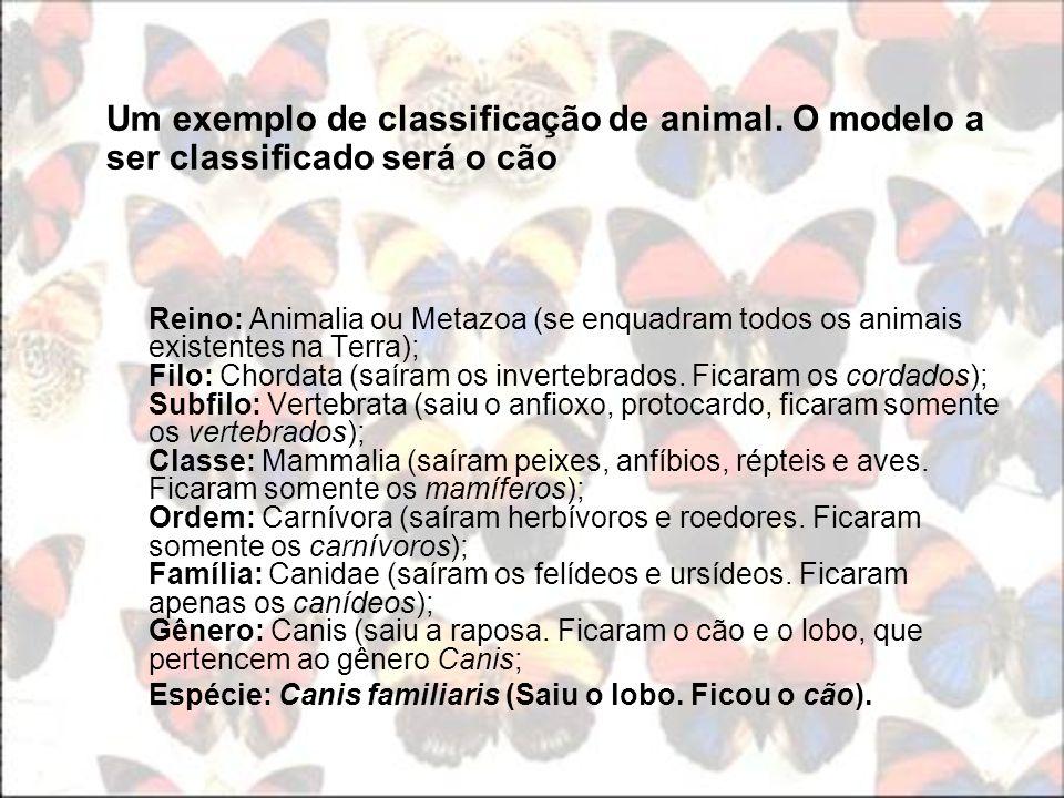 Um exemplo de classificação de animal