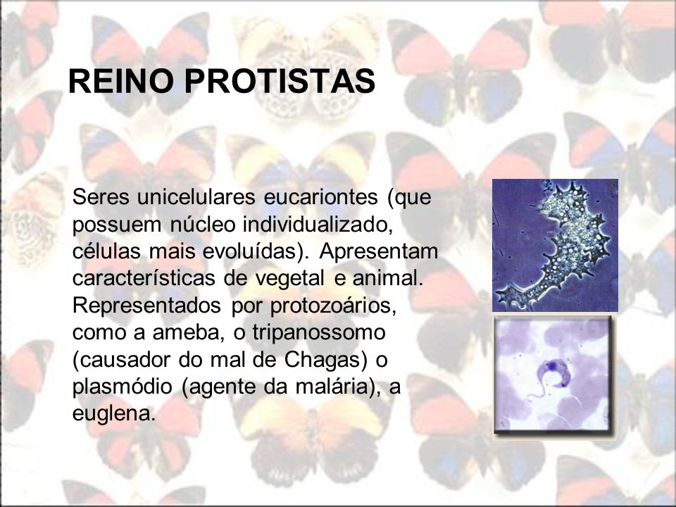 REINO PROTISTAS