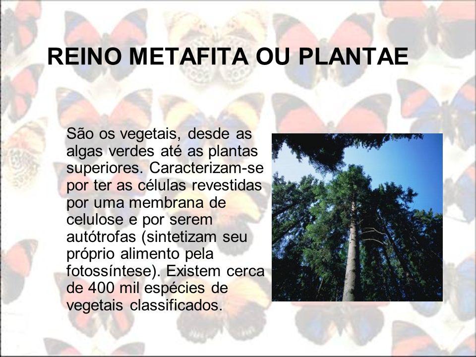 REINO METAFITA OU PLANTAE