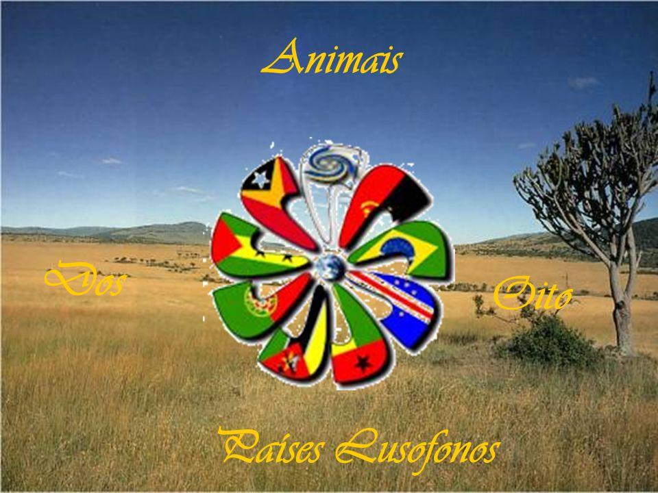Animais Dos Oito Países Lusofonos