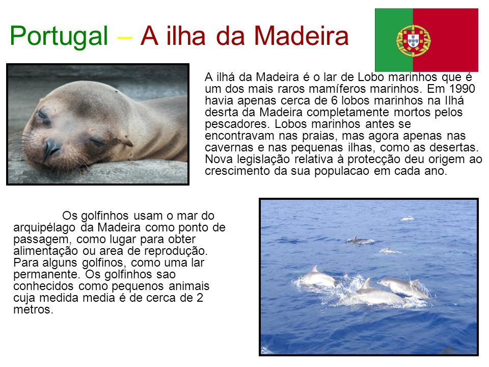 Portugal – A ilha da Madeira