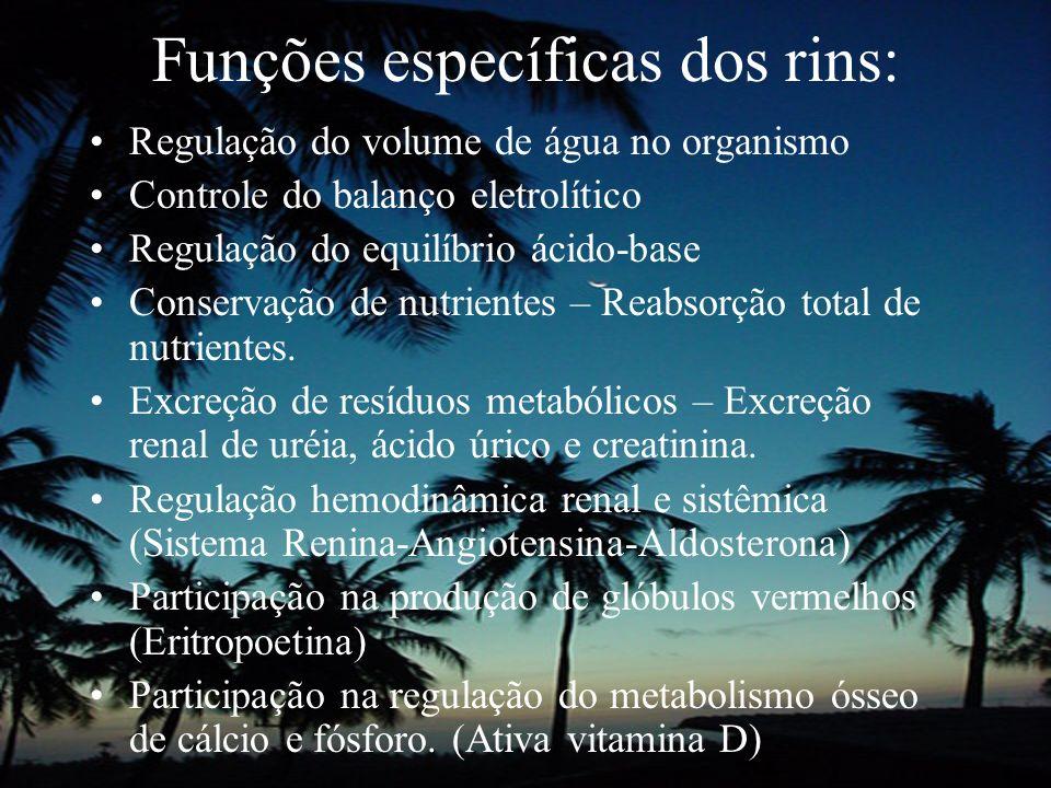 Funções específicas dos rins: