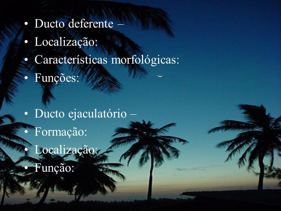 Ducto deferente –Localização: Características morfológicas: Funções: Ducto ejaculatório – Formação: