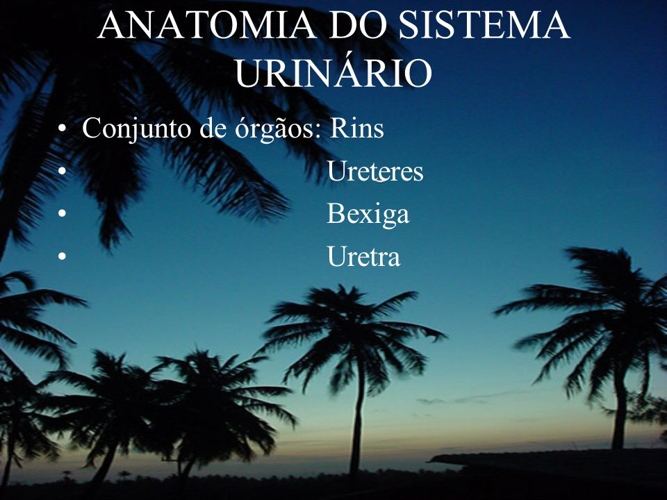 ANATOMIA DO SISTEMA URINÁRIO